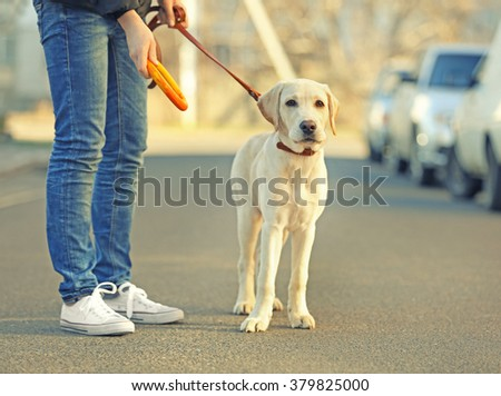 Owner playing with Labrador dog in city on unfocused background #379825000