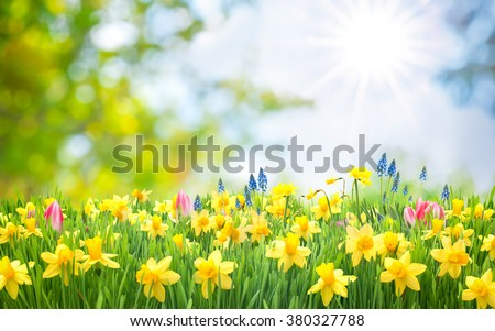 Easter background with beautiful spring flowers #380327788