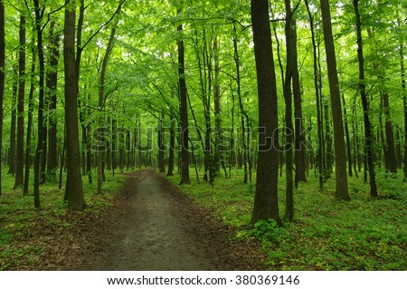 Green forest and the path #380369146
