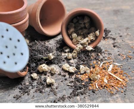 pot flower seeds spilled on wooden board #380529844