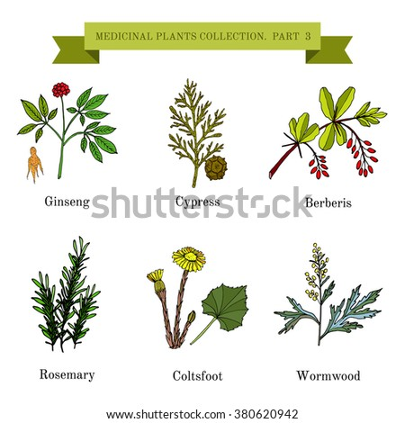 Vintage collection of hand drawn medical herbs and plants. Botanical vector illustration. #380620942