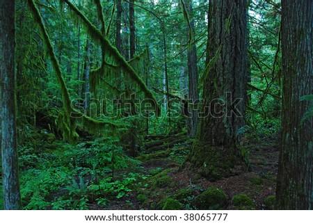 rain forest #38065777