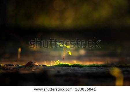 Small plant in the sunlight Royalty-Free Stock Photo #380856841