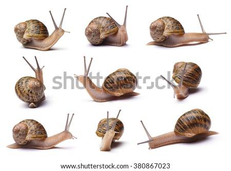 Set of snails isolated on white background Royalty-Free Stock Photo #380867023