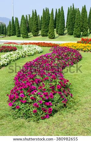 The beautiful of Flower garden  at public tourist attraction Royal flora garden Chiangmai Thailand  #380982655