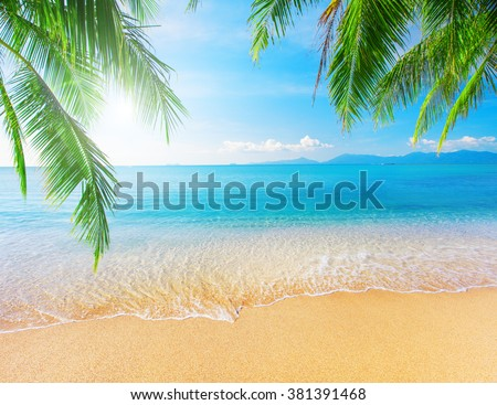Palm and tropical beach #381391468