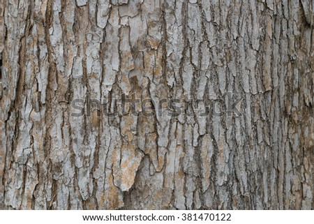 Close-up view of highly detailed tree bark texture. Nature wood background. Seamless texture pattern from old cracked bark. Ancient and weathered brown tree bark filling the frame. #381470122