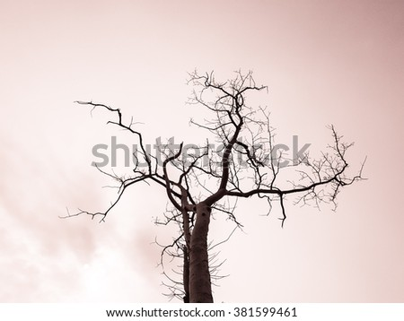 Dry tree with sky arts filter imaged backgrounds #381599461