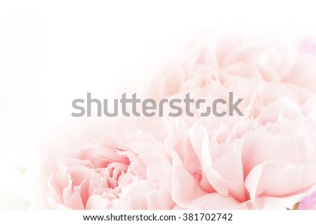 floral background of pink carnation flowers Royalty-Free Stock Photo #381702742