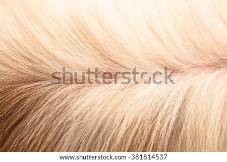 Furry long hair background #381814537