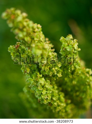 Green plant. Abstract natural background #38208973