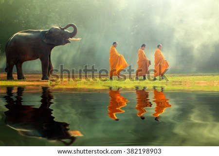 Young elephant with Monk alms round  Royalty-Free Stock Photo #382198903