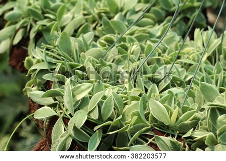 Fern leaves in the nature #382203577