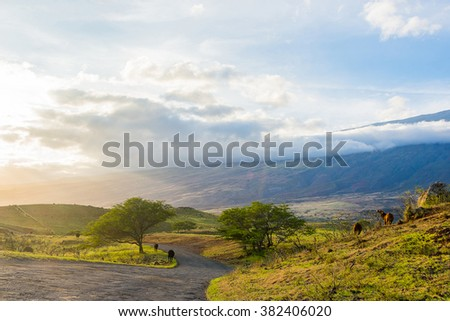 Beautiful sunset view over the volcano on the island of Maui, Hawaii, with a road going down into the horizon. Amazing wallpaper picture.