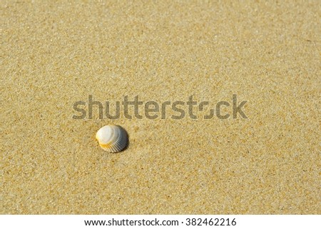 Sea shell on sand. Summer beach background. Top view #382462216