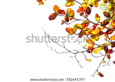 Leaves in summer season on high key background. #382641397