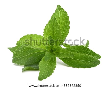 Stevia rebaudiana bunch  isolated on white background #382692850