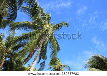 Coconut palms gently sway in the sea breeze #382757983