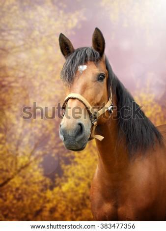 Beautiful brown horse in autumn season landscape