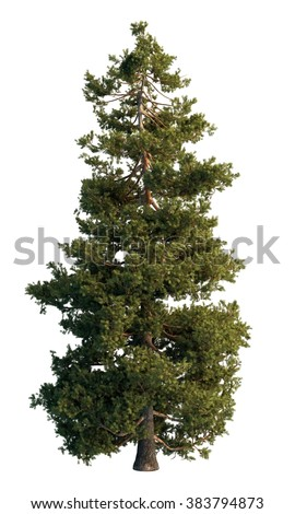 Pine tree isolated on white #383794873