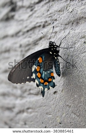 Butterfly Royalty-Free Stock Photo #383885461