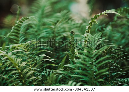 leaf of fern in forest #384541537