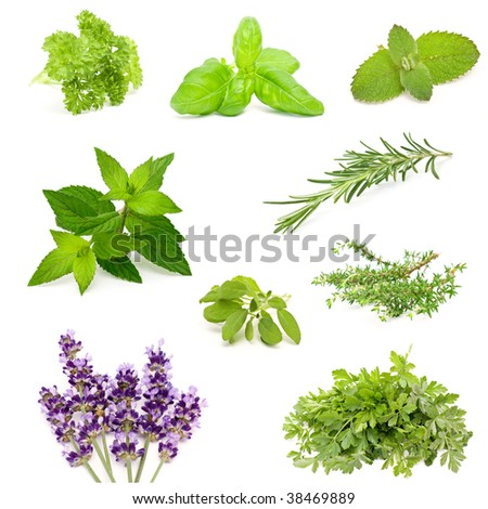 herb collection #38469889