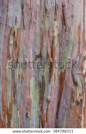 The colorful bark #384788311