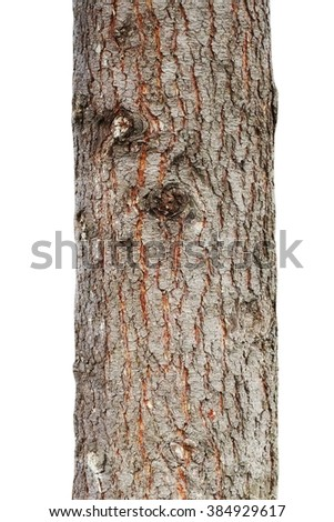 tree trunk isolated on white background  #384929617