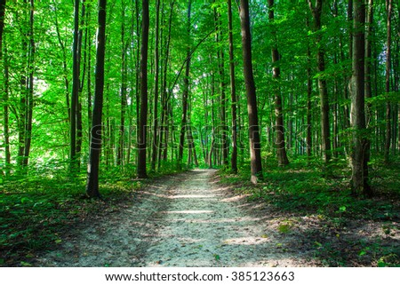 beautiful green forest #385123663