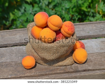 Ripe apricots on green background.  #385221049