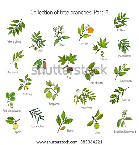 Set of different tree branches. Hand drawn vector illustration #385364221