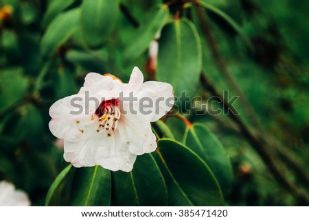 beautiful colorful new flowers pink magnolia in botanical garden in spring time #385471420