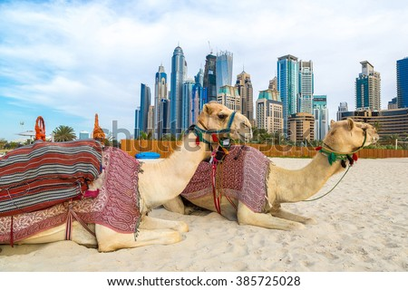 Camel in front of Dubai Marina in a summer day, United Arab Emirates Royalty-Free Stock Photo #385725028