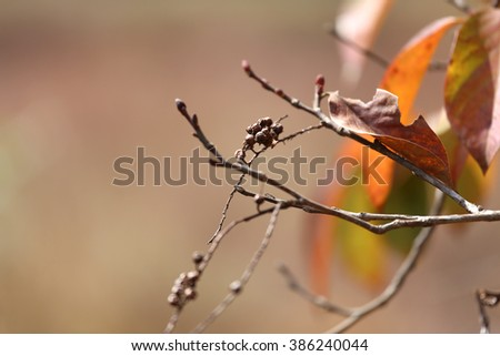 Nature background - color of autumn trees and dried leaves and branch. #386240044