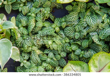 Top view of houseplants, Narve Plant #386334805