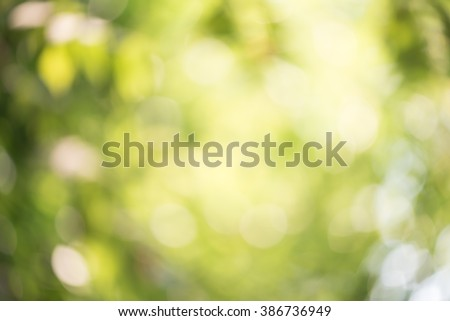Green abstract background ,Blur background from green leaf ,Green bokeh background