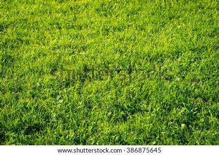 Green grass surface #386875645