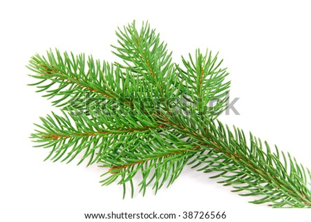 fir branch Christmas decoration on white background #38726566