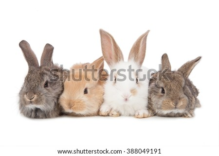 Pets. Four of the rabbit isolated on white background.