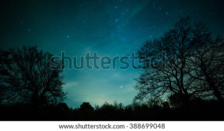 Night in the forest