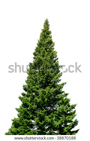 Lone green spruce tree isolated on white #38870188