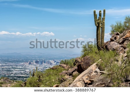 A Saguaro cactus stands watch over the city of Phoenix.