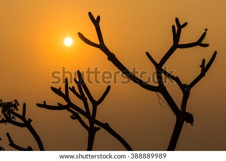 The golden light of the sun behind a tree branch beautiful. #388889989