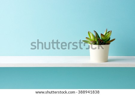 A shelf and a plant Royalty-Free Stock Photo #388941838