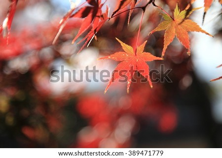 Red leave #389471779
