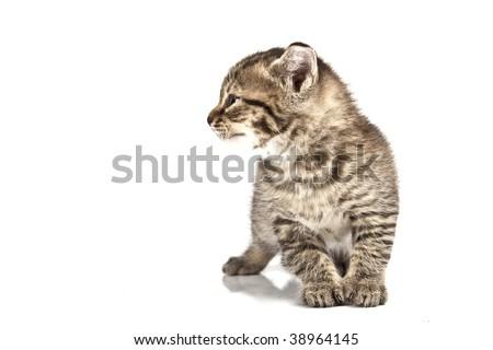 Adorable kitten on white background #38964145