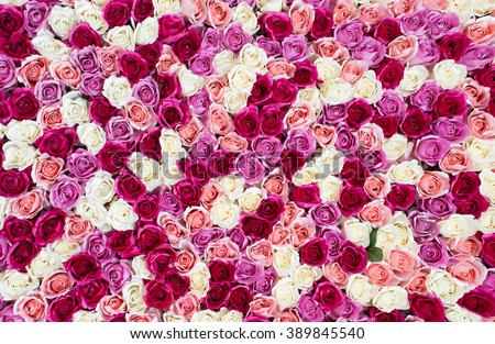 flowers wall background with amazing red and white roses. #389845540