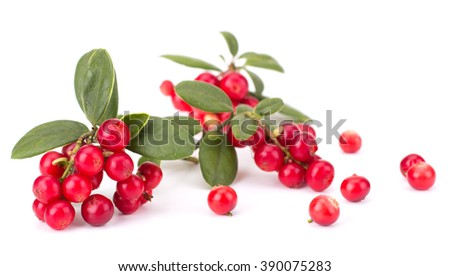 Fresh hand-picked forest Cowberry isolated on white background #390075283