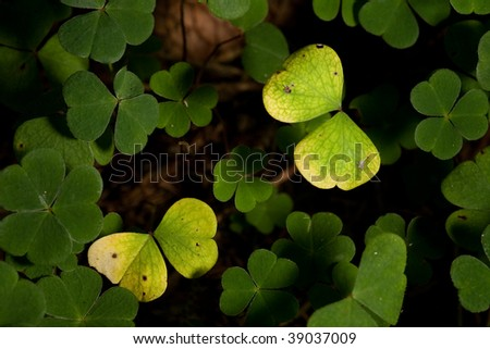 Butterfly of Clover Leafs #39037009